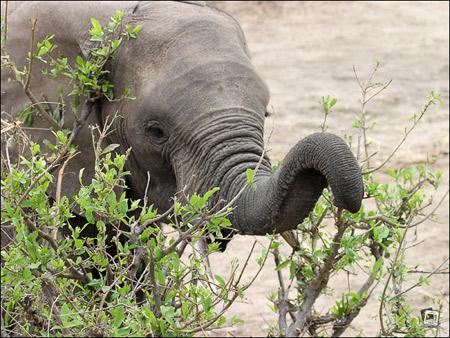 nicht lustig elefant