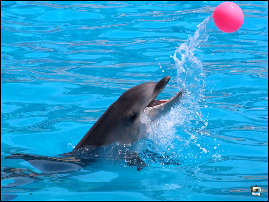 spiele delfin